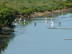 Exploring wildlife at Xuan Thuy National Park
